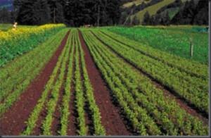 Pflanzenproduktion_thumb.jpg