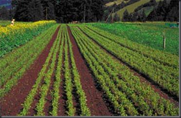 Pflanzenproduktion